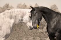 Murales Caballo blanco y caballo negro
